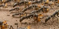 Root Cause at workplace- ANT